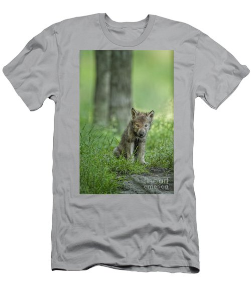Timber Wolf Pup Men's T-Shirt (Athletic Fit)