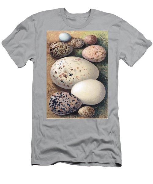 Assorted Birds Eggs, Historical Art Men's T-Shirt (Athletic Fit)
