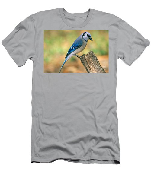 Blue Jay Men's T-Shirt (Slim Fit) by Millard H. Sharp