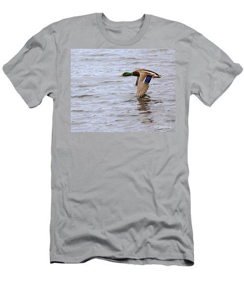 Mallard Duck In Flight Men's T-Shirt (Athletic Fit)