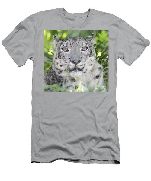 Snow Leopard Men's T-Shirt (Slim Fit) by John Telfer