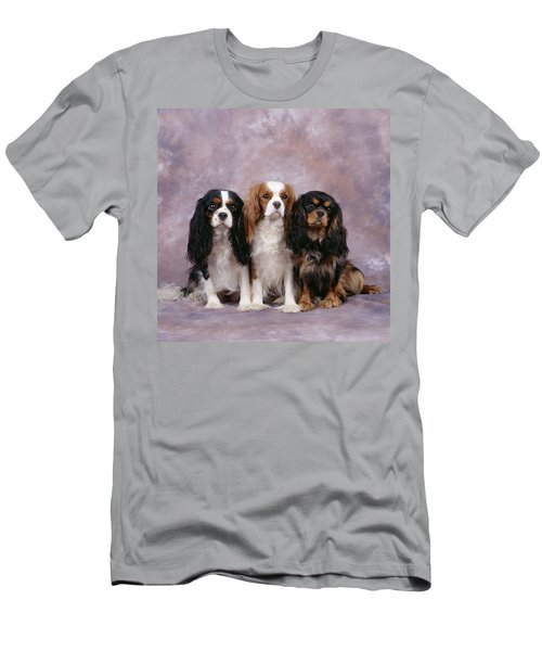 Cavalier King Charles Spaniels Men's T-Shirt (Athletic Fit)