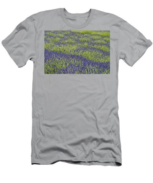 Lavendar Field Rows Of White And Purple Flowers Men's T-Shirt (Athletic Fit)