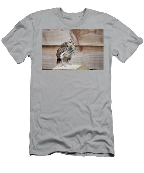 Baby Peacock Men's T-Shirt (Athletic Fit)