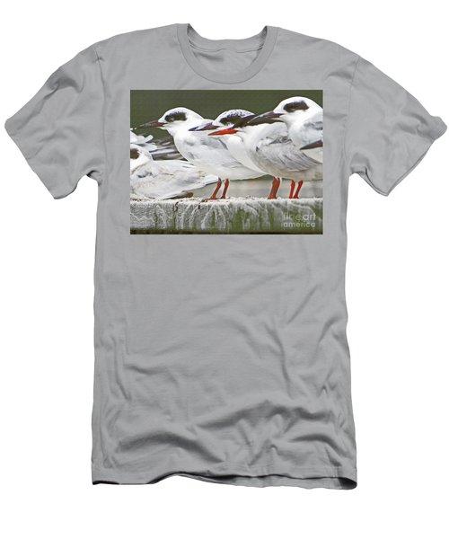 Birds On A Ledge Men's T-Shirt (Athletic Fit)
