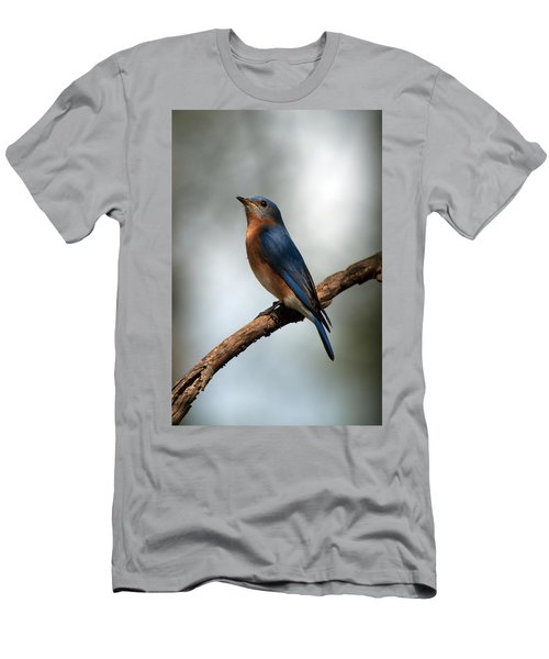 Bluebird -why Yes Men's T-Shirt (Athletic Fit)