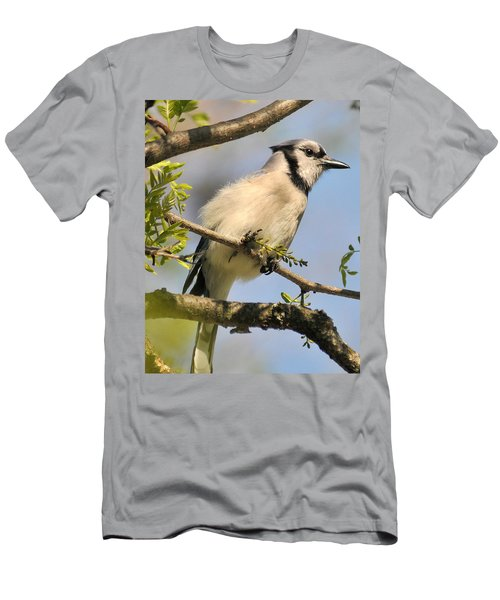 Bluejay 310 Men's T-Shirt (Athletic Fit)