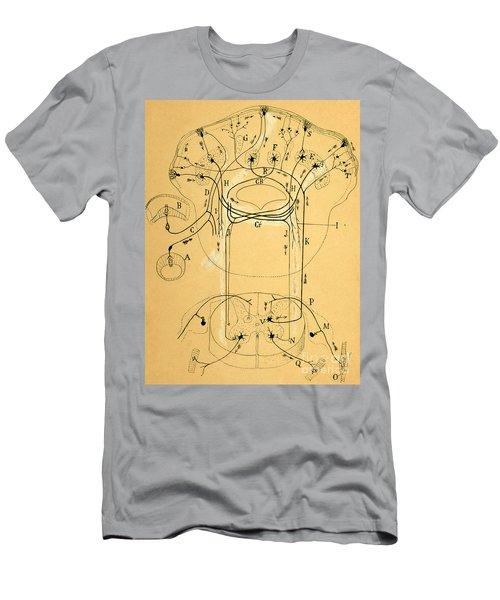 Brain Vestibular Sensor Connections By Cajal 1899 Men's T-Shirt (Athletic Fit)
