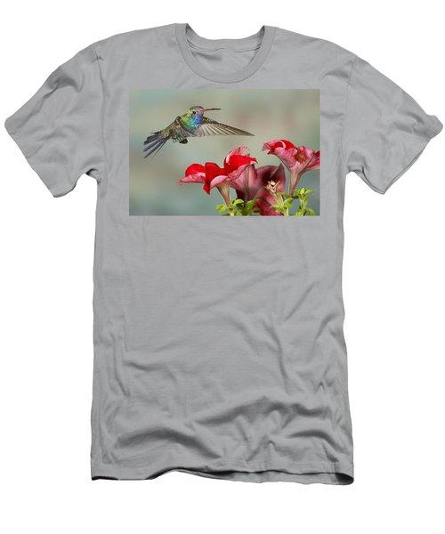Broad Billed Hummingbird 4 Men's T-Shirt (Athletic Fit)