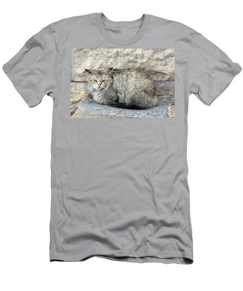 Camo Cat Men's T-Shirt (Athletic Fit)