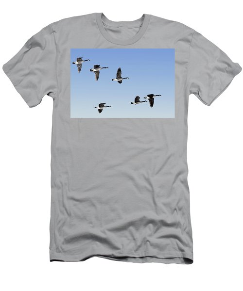 Canada Geese In Flight, Algonquin Park Men's T-Shirt (Athletic Fit)