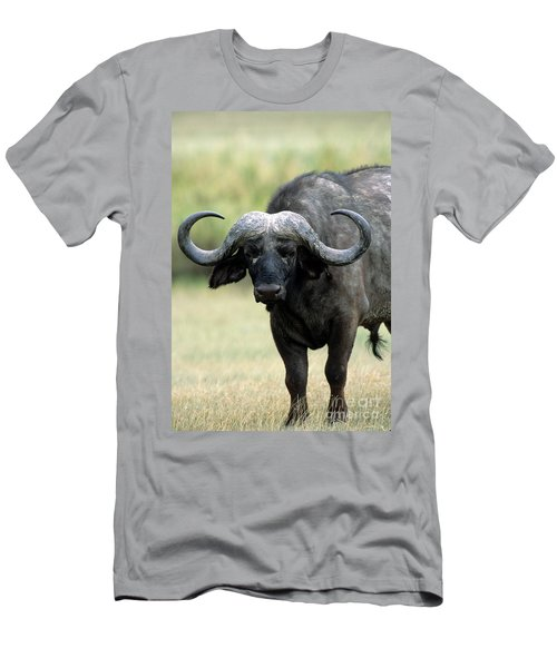Cape Buffalo, Male Men's T-Shirt (Athletic Fit)