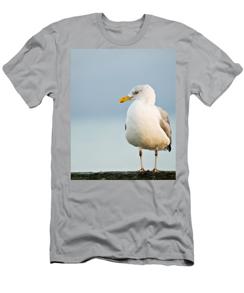 Cape Cod Seagull Men's T-Shirt (Athletic Fit)