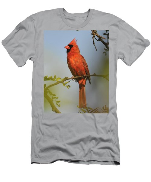Cardinal 329 Men's T-Shirt (Athletic Fit)