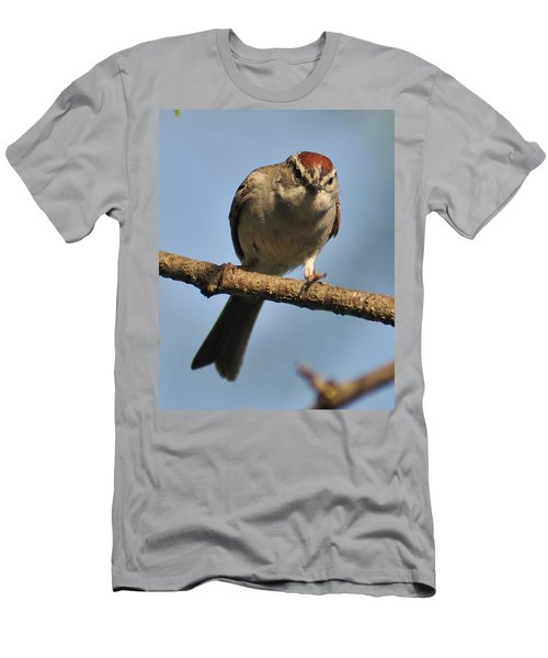 Chipping Sparrow 265 Men's T-Shirt (Athletic Fit)