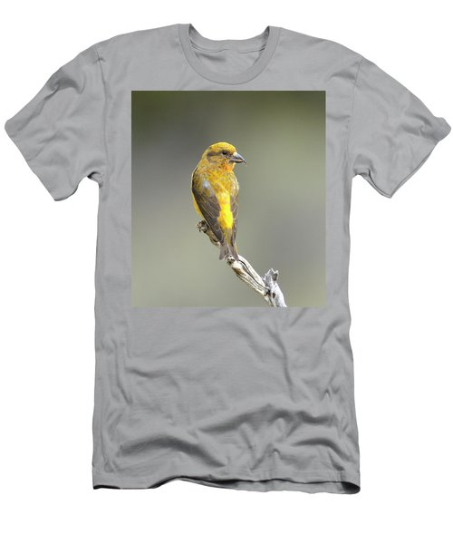 Common Crossbill Loxia Curvirostra Men's T-Shirt (Athletic Fit)