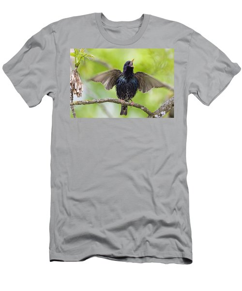 Common Starling Singing Bavaria Men's T-Shirt (Athletic Fit)