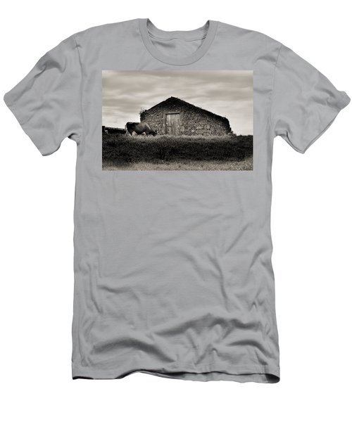 Cow Grazes At Rustic Barn  Men's T-Shirt (Athletic Fit)