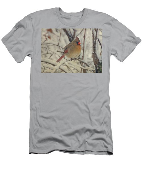 Female Cardinal In The Snow II Men's T-Shirt (Athletic Fit)