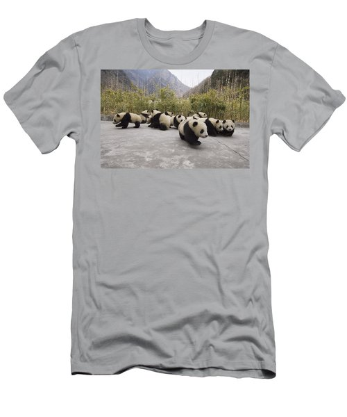 Men's T-Shirt (Athletic Fit) featuring the photograph Giant Panda Cubs Wolong China by Katherine Feng