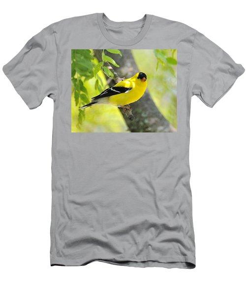 Goldfinch 299 Men's T-Shirt (Athletic Fit)