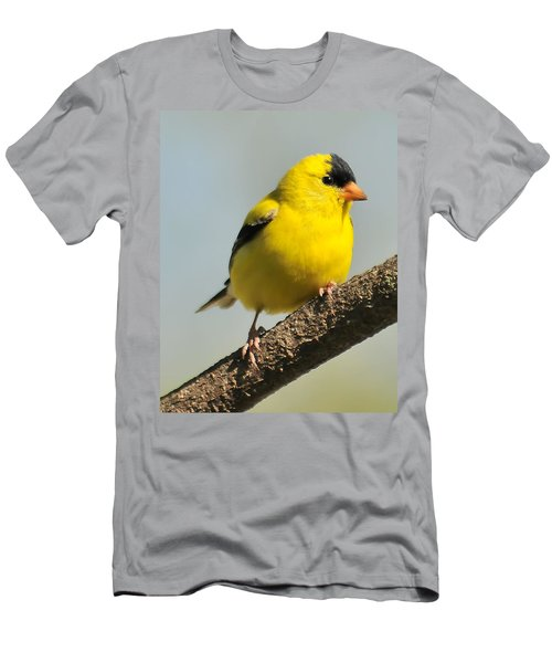 Goldfinch 306 Men's T-Shirt (Athletic Fit)