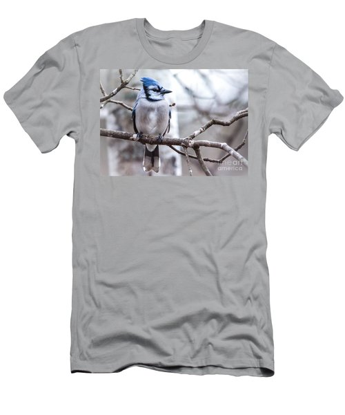 Gorgeous Blue Jay Men's T-Shirt (Athletic Fit)