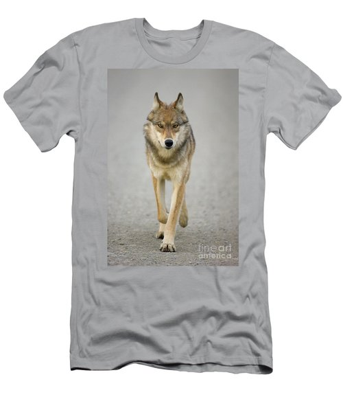 Gray Wolf Denali National Park Alaska Men's T-Shirt (Athletic Fit)