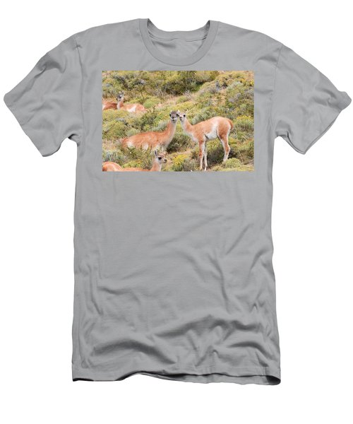 Guanaco Men's T-Shirt (Athletic Fit)