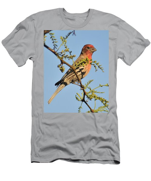 Housefinch 272 Men's T-Shirt (Athletic Fit)