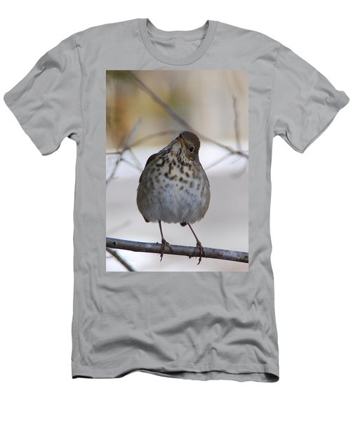 Inquisitive Hermit Thrush Men's T-Shirt (Athletic Fit)