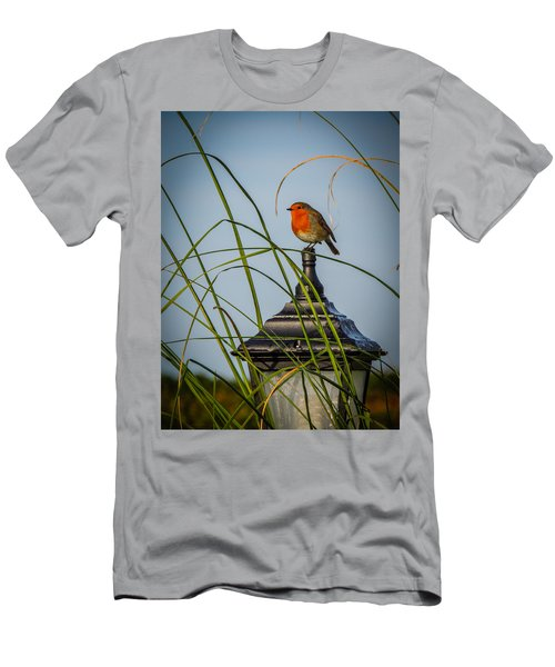 Irish Robin Perched On Garden Lamp Men's T-Shirt (Athletic Fit)