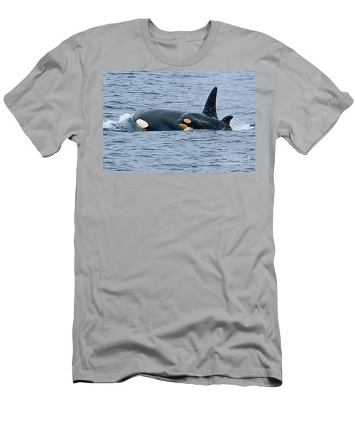 Men's T-Shirt (Slim Fit) featuring the photograph Killer Whale Mother And New Born Calf Orcas In Monterey Bay 2013 by California Views Mr Pat Hathaway Archives