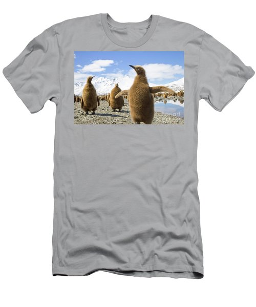 King Penguin Chicks South Georgia Island Men's T-Shirt (Athletic Fit)