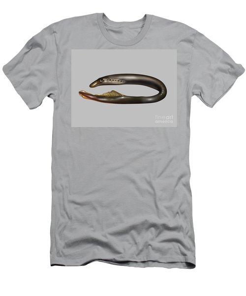 Lamprey Eel, Illustration Men's T-Shirt (Athletic Fit)