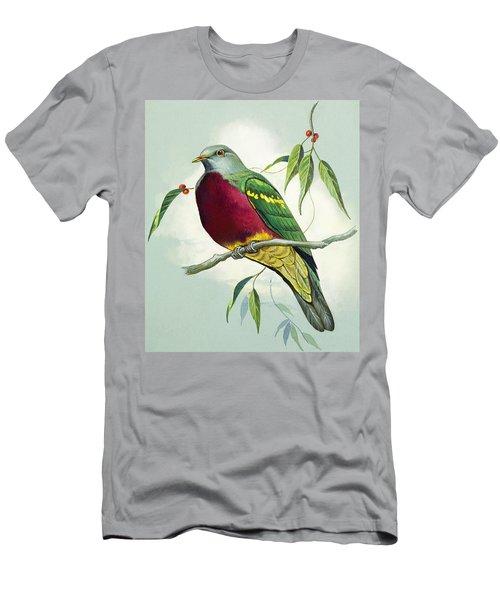 Magnificent Fruit Pigeon Men's T-Shirt (Athletic Fit)