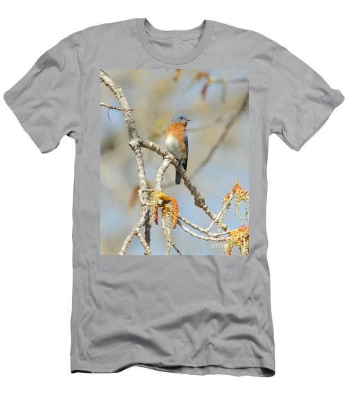 Male Bluebird In Budding Tree Men's T-Shirt (Slim Fit) by Robert Frederick