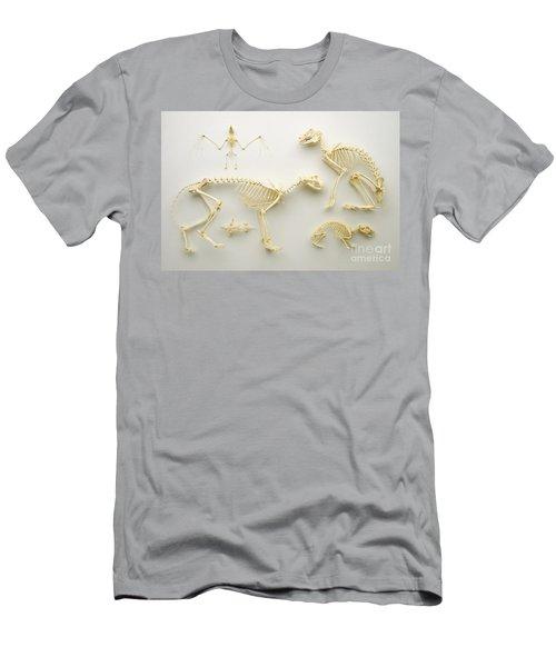 Mammalian Skeletons Men's T-Shirt (Athletic Fit)