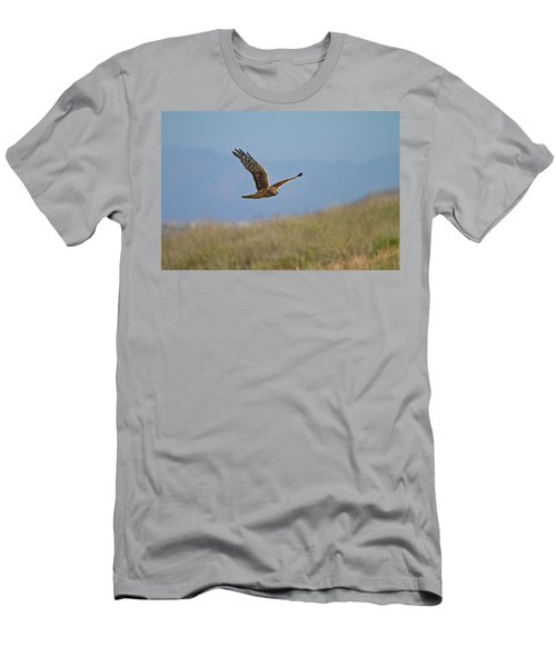 Northern Harrier In Flight Men's T-Shirt (Slim Fit) by Duncan Selby