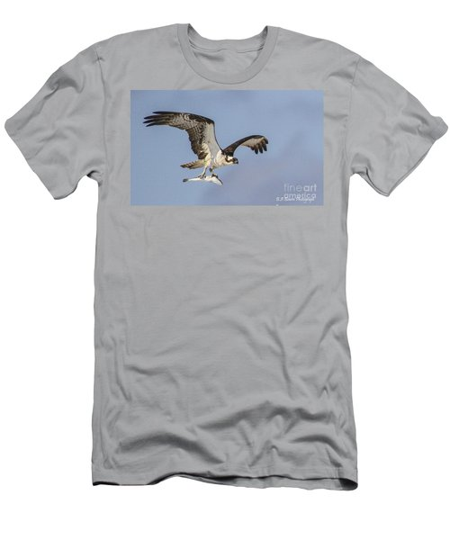 Osprey With Dinner Men's T-Shirt (Athletic Fit)