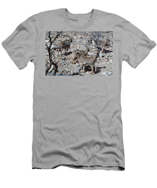Out Of Africa  Mountain Goats Men's T-Shirt (Athletic Fit)