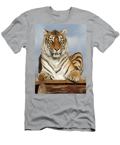 Out Of Africa Tiger 4 Men's T-Shirt (Athletic Fit)