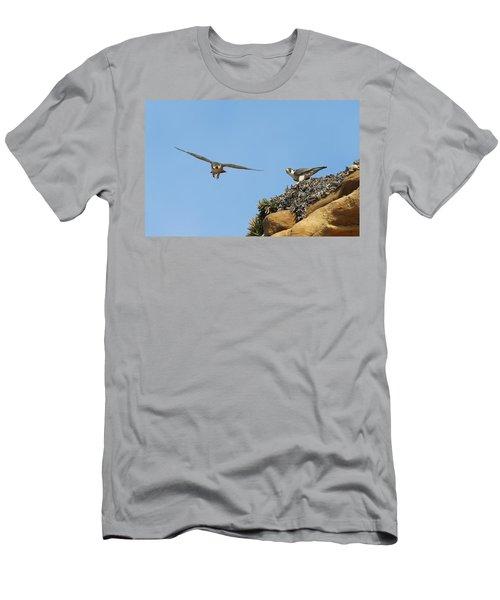 Peregrine Falcons - 1 Men's T-Shirt (Athletic Fit)