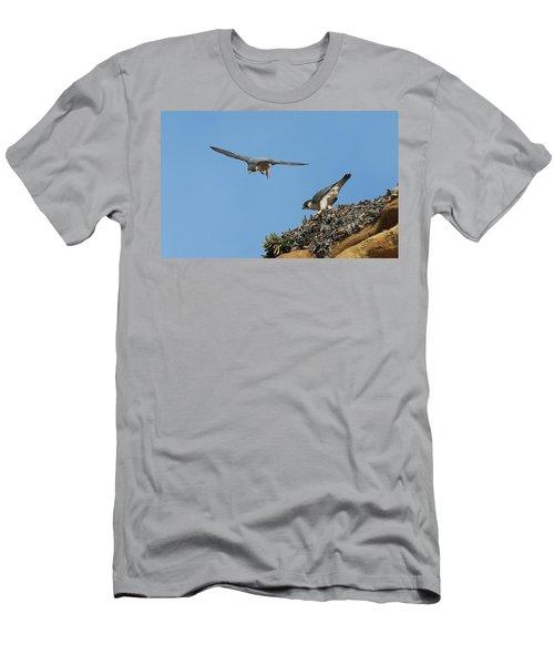 Peregrine Falcons - 6  Men's T-Shirt (Athletic Fit)