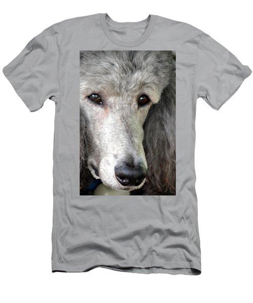 Portrait Of A Silver Poodle Men's T-Shirt (Athletic Fit)