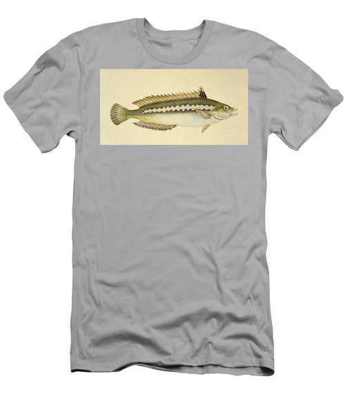 Rainbow Wrasse Men's T-Shirt (Athletic Fit)