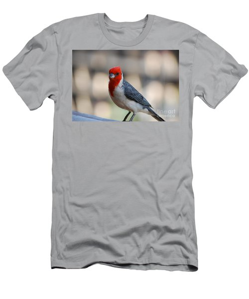 Red Crested Cardinal Men's T-Shirt (Slim Fit) by DejaVu Designs