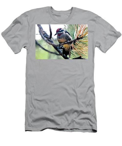 Red-naped Sapsucker On Pine Tree Men's T-Shirt (Athletic Fit)