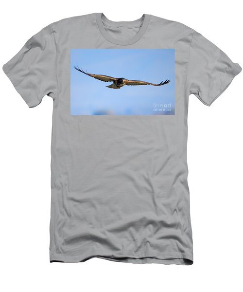 Red -tail Stare Men's T-Shirt (Athletic Fit)