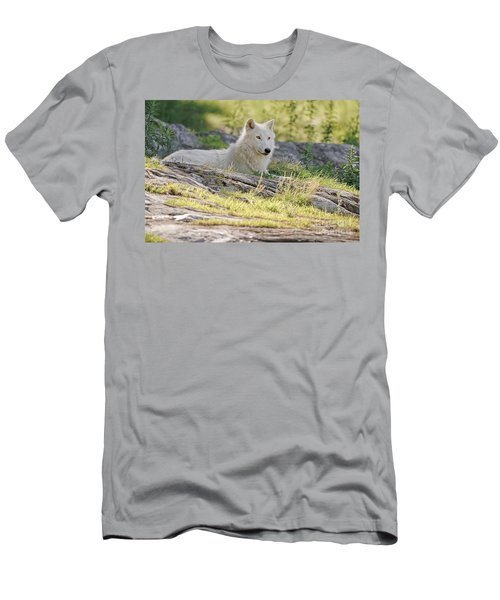 Men's T-Shirt (Slim Fit) featuring the photograph Resting Arctic Wolf by Wolves Only